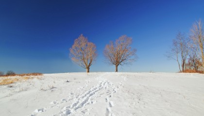Two Trees | maxisaweso.me